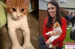واکنش نخست وزیرنیوزیلند به تصادف گربهاش+تصاویر