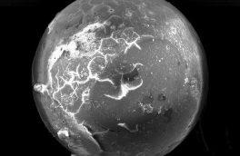 کشف بقایای شهاب سنگی در فسیل صدف